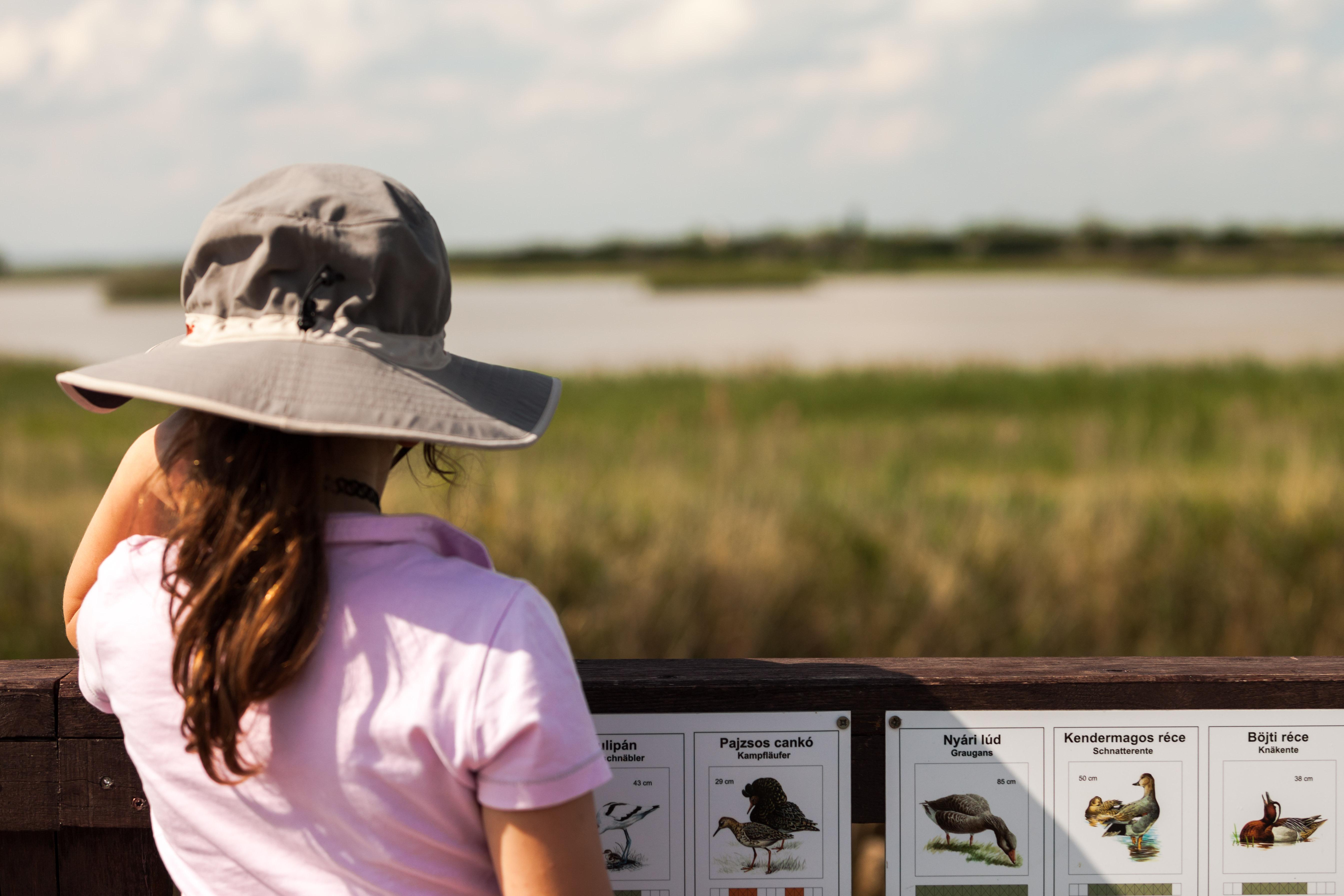 Fertő-Hanság és Őrségi Nemzeti Park - Hajnali madárles